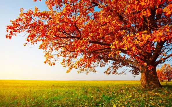 autumn_trees_wallpaper_1080p-1