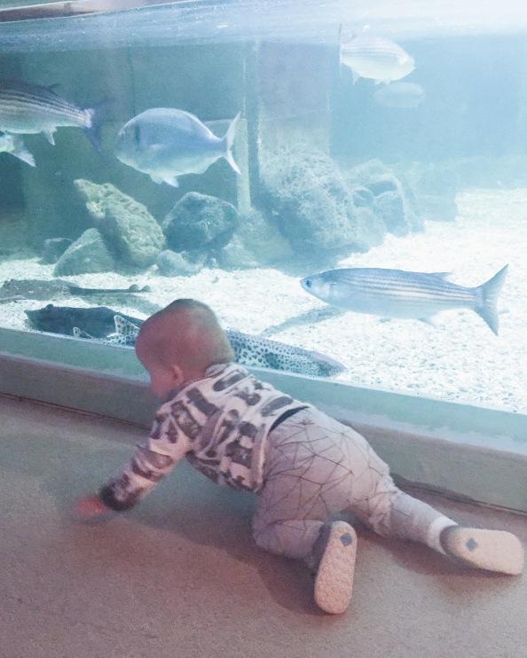 fish crawl